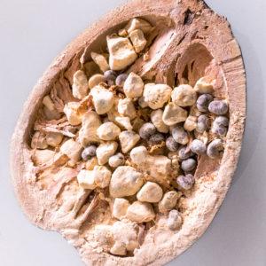 Baobab Fruit Powder - BIO - Vegan